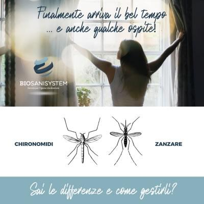Zanzare e Chironomi